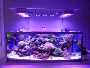 fish tank lights picture