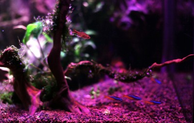 planted aquarium lighting lumini