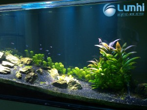 aquarium plant lighting