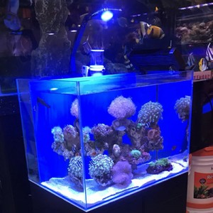 led aquarium light reef