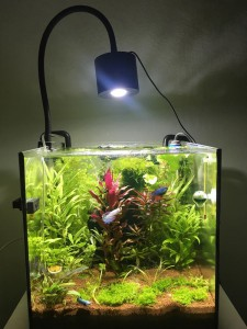 planted tank light